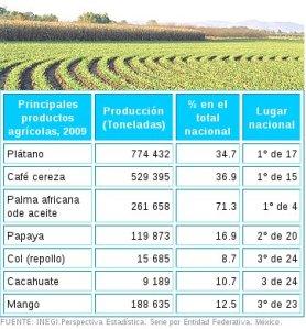Cuadro 4 Sector agrícola